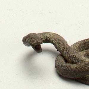 serpent Miniature