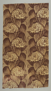 Section from a curtain, glazed chintz, roller printed in shades of brown and cream. On light brown ground large clusters of hydrangea blossoms and foliage in cream and darker brown, in perpendicular arrangement.