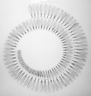 Flat spiral ring of laminated clear plastic, faded dahlia petals embedded within.