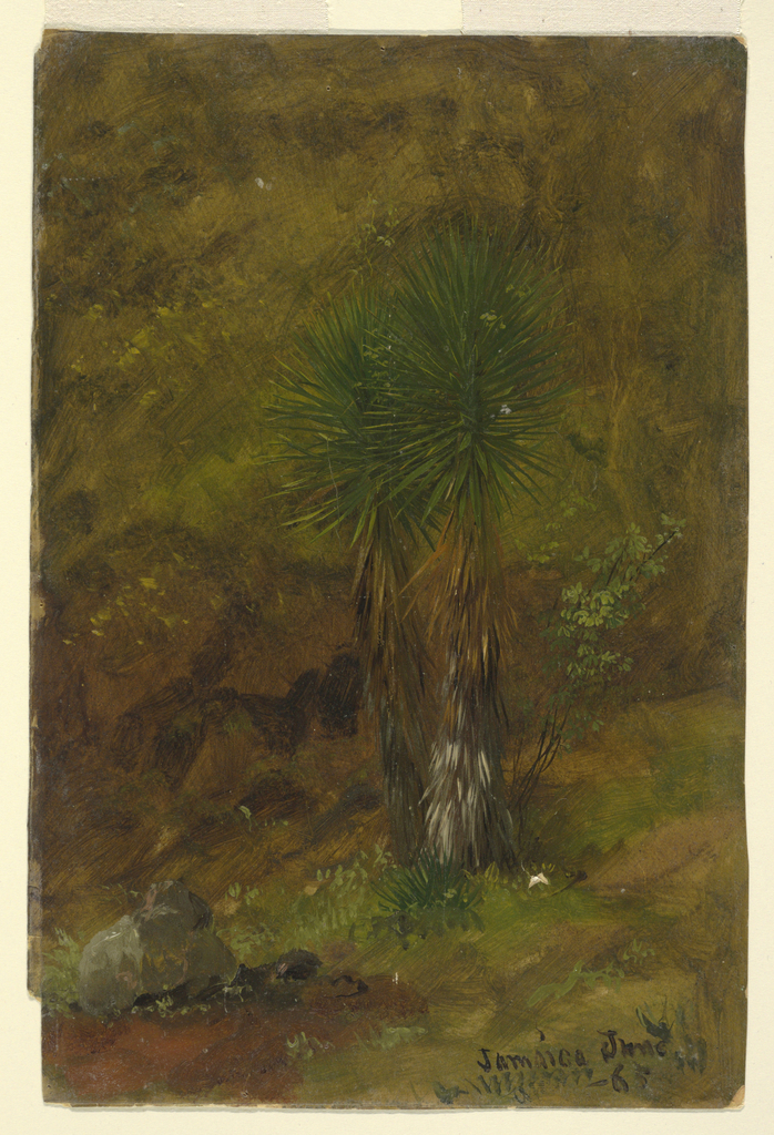 Vertical image of a group of two palm trees growing beside a hillside.
