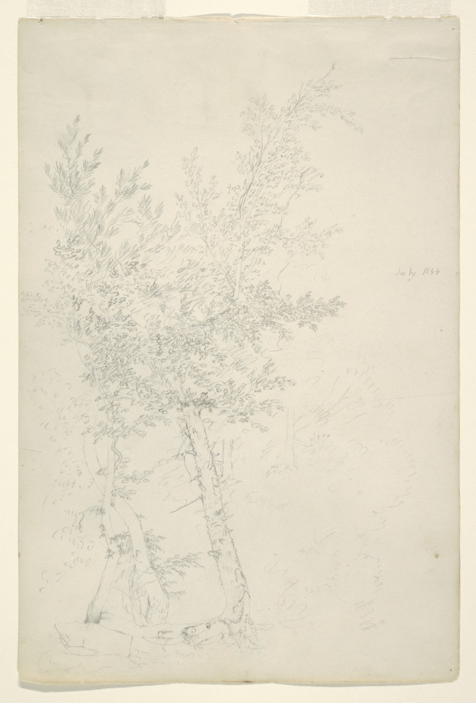 Recto: Vertical view of a group of trees in hill country. Verso:  Cloudy sky over a ridge.