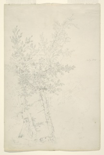 Recto: Vertical view of a group of trees in hill country.