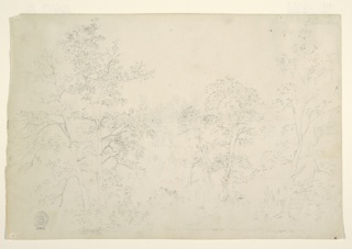 Horizontal view of chestnut trees at water's edge