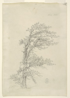 Recto:  Vertical view of an evergreen in a storm swept country. Verso:  Horizontal view of a seated dog shown turned toward the left and ferns upon an outlined boulder.