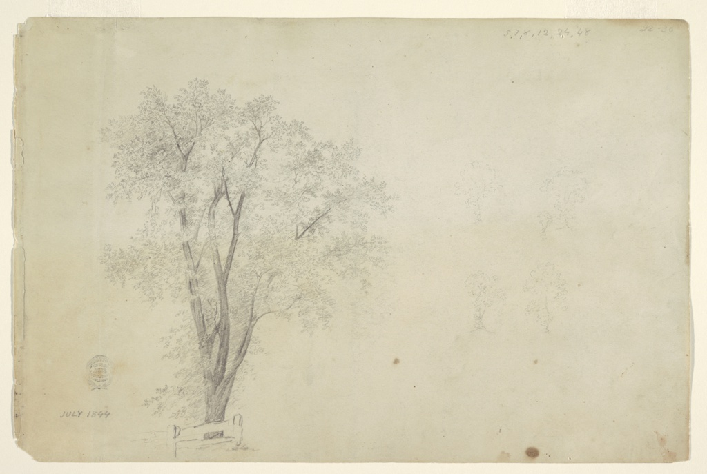 Drawing, Trees