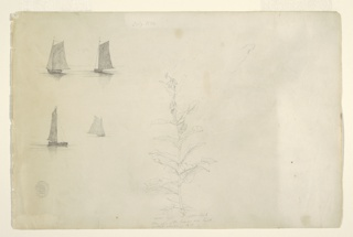 Four horizontal views of sailing boats, dispersed in two rows each at left and a plant at center.