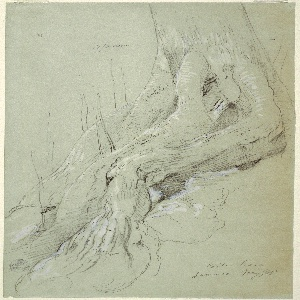Recto: Vertical view of the roots of a cotton tree growing on a slope.  Verso: Two indistinct pencil sketches.