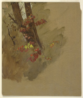 Drawing, Botanical Studies, 1860–70
