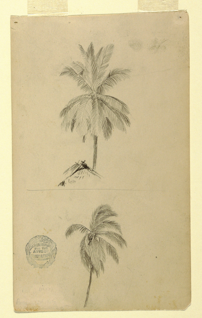 Vertical view showing a palm rising from behind a roof at top and a trunk and top of a palm with windswept branches at bottom.
