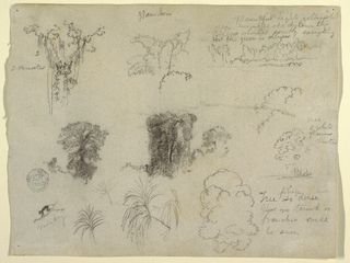 Horizontal view containing a tree top, at upper left; branches, at  upper center; trees at a river bank, at upper right; trees, at left center; tree tops and plants on the edge of water, at center right; monkey walking upon a branch and tree tops, at lower left.