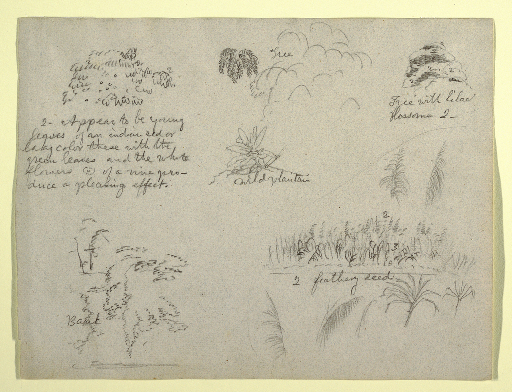 Horizontal view showing details of leaves and vine at top; a tree at center and a tree with blossoms at top right; a plant at center; and a bank at bottom left; and seed at bottom right.
