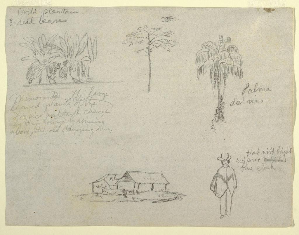 Drawing, Botanical sketches, 1853