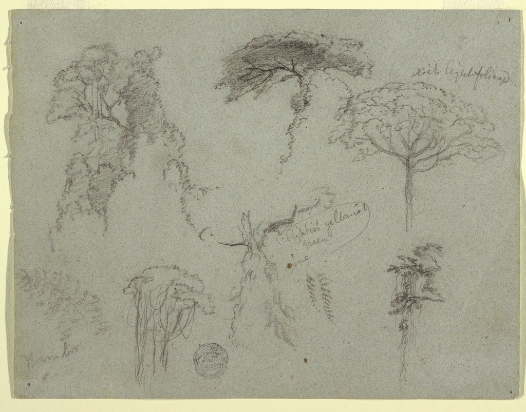 Horizontal view containing a group of trees, at upper left; tree tops, at upper center and right; and three trees with vines, at lower center.