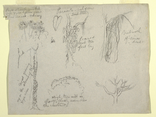 Horizontal view of botanical studies of Columbia plants and trees.