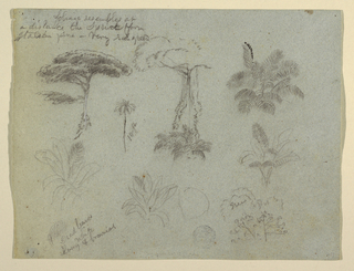 Horizontal view with nine designs of trees, tree tops, plants, and leaves.
