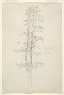 Recto: Horizontal view of a rough bridge crossing a stream in the left foreground, with wooded, mountain country.  Verso: Vertical view of an evergreen with forked trunk.