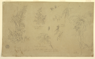"Drawing, Botanical sketches, ""near Jorje"", July 23, 1857"