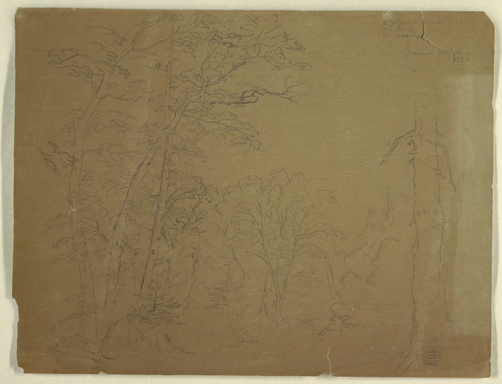 Recto:  Horizontal view of trees of a wood