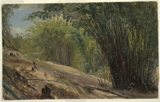 Drawing, Bamboo Grove, Jamaica, 1865