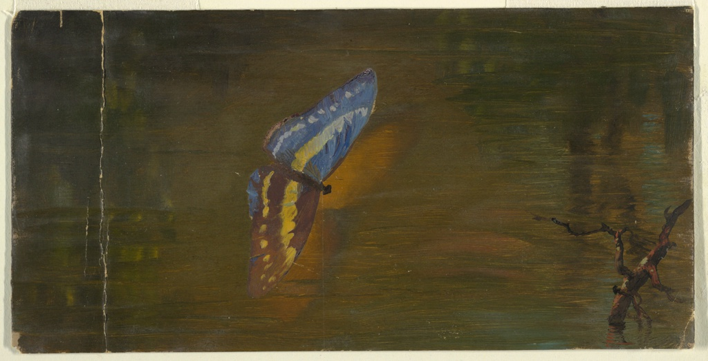 Horizontal view at dusk of a butterfly over water with a dry tree trunk standing in the water, below at right.
