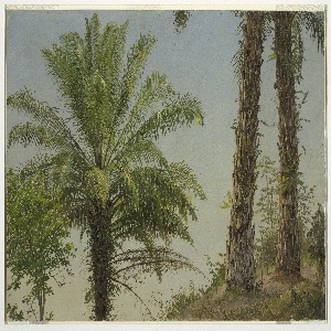 Horizontal oil sketch showing the top of one palm tree, with a glorious crown of palm fronds, beside a pair of coarse, scaly trunks belonging to two different palm trees.