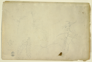 Recto:  Horizontal studies of thorns and thistles.   Verso: Profile of mountain tops and a spaniel dog, lying down.