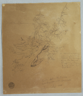 A rugged tree with a rough sketch of the Falls in the left background.