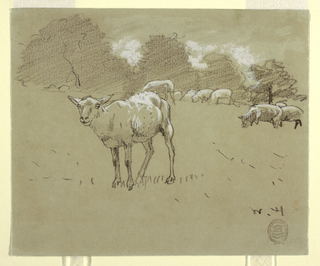 Horizontal view of sheep grazing in a field, with a row of trees in background.