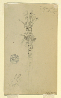 Recto: Vertical study of the upper portion of a palm tree stem, with branches and foliagle visible.  Verso: Horizontal view across a stream or river into a broad bank filled with leafy trees.