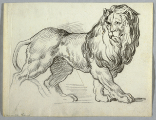 A lion in motion walking toward the right. Hind legs unfinished.