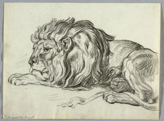Lion lying, facing left. Portion of hindquarters off page.