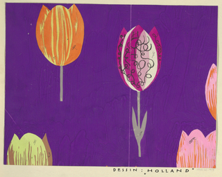 Multicolored tulips on purple ground.