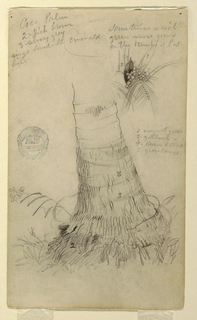 Vertical format showing the lower quarter of tree trunk [or palm stem ?] surrounded at base by grasses, while at upper right, a study of leaves, branches and coconuts, labelled with numbers is visible.