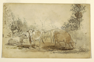 Four cows (one on the ground, one facing the viewer and two grazing) in a grassy pasture with trees on either side.