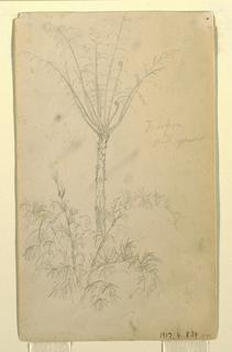 Drawing, Botanical Studies of Tree, May–June 1857
