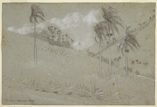 Horizontal view of a valley between steep hills, with scattered palms and a row of maguey in foreground.