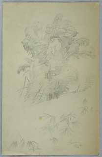 Vertical view of a group of large trees at top half of sheet and details of bough across the bottom.