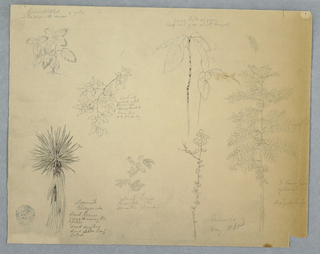Horizontal view of a series of botanical studies with at top left a leafy plant, at top center a bough with flowers and leaves, at top right two stems with veined leaves, at top far right a fern in small scale, at bottom left a Spanish bayonet tree, at bottom center left boughs, at bottom center right a stem with leaves, and at far right a six foot tree.