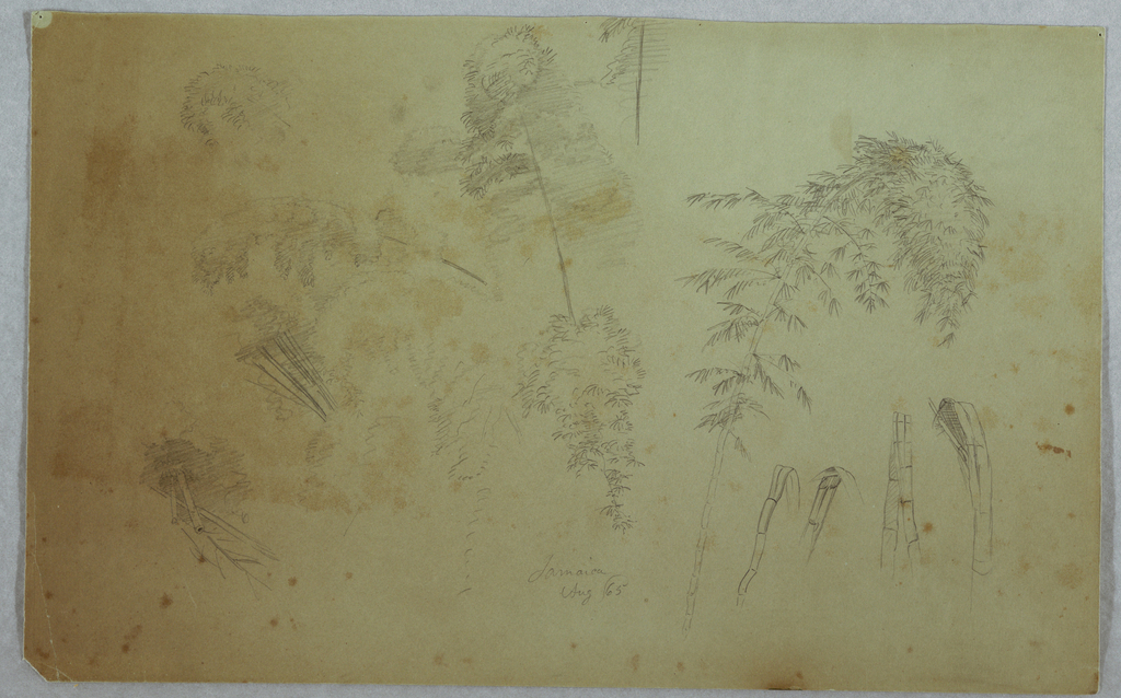 Horizontal view of tops of trees, a bamboo and details of bambo across the sheet.