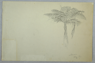 Horizontal view of a fern tree at top right half of sheet