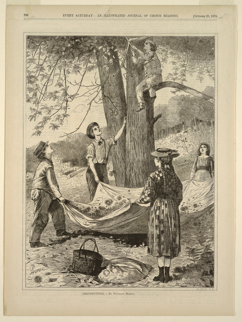 Two boys and two girls holding a blanket into which a third boy, in a tree, shakes down chestnuts.  Hillside in background, with another group of children to the right gathering chestnuts.