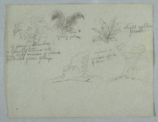 Horizontal view of bamboos with stems, a vine and a young palm, and plant top across the upper half of sheet and two designs for curious and common effects of rain falling from clouds over ridges.