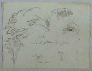 Horizontal view of tree tops, a flying white bird, vines and across the bottom three flowering plants, one identified as a water plant.