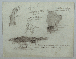 Horizontal view of details of plants and flowers at top left and center, a group of trees on a river bank at top right, and larger mass of trees at bottom right.