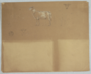 Horizontal sheet contains at top center a standing sheep, turned toward the left and beside it, at right, is the back part of a standing sheep, shown obliquely and straight.  At upper right is the head of a ram, shown from the front while at center lower left is the face of a sheep's head, shown in profile, and that of another, shown from the front.  Most of the sheet is blank.
