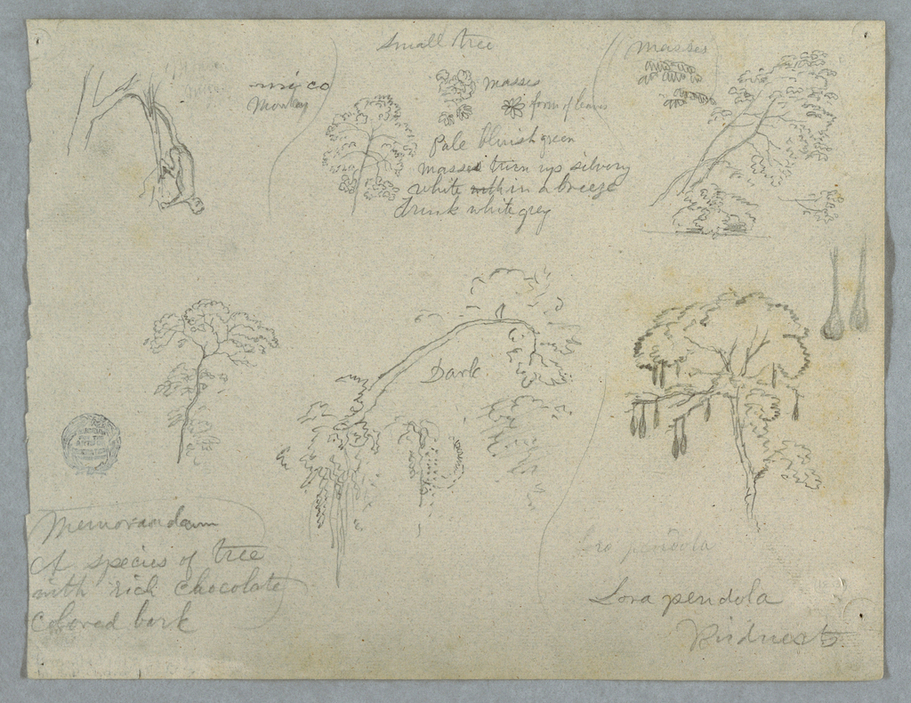 Horizontal view containing a monkey hanging from a branch, at upper left; a small tree tree top and details, at upper center; branches with leaves, at upper right; tree, at lower left;  a detail of a tree branch, at lower center; and a tree with hanging seeds, two of which are shown in larger scale at right, at lower right.