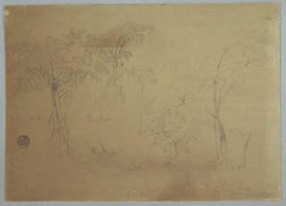 Horizontal sheet containing two tree forms at left followed by a tree trunk in the bottom center and two plants, one with enormous leaves, at the right.