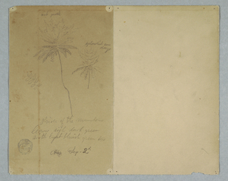 Horizontal view of a branch, a tree, and a tree top at left of sheet.