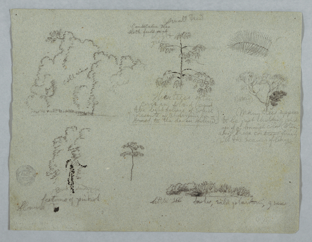 Horizontal view containing a group of trees at upper left; a candelabra tree with a sloth, at upper center; a branch and a tree top, at upper right; a group of trees, at lower left; a tree, at lower center; plants, at lower right.