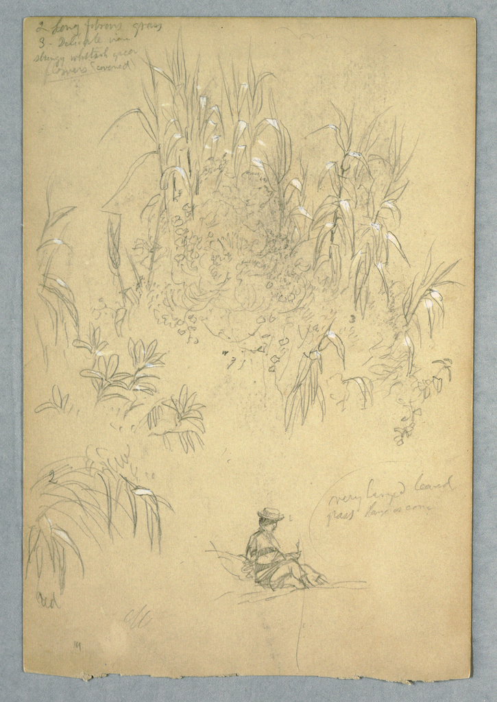 Vertical view of a large group of detailed plant studies with a seated man dressed in native Ecuadorian clothing at lower right.